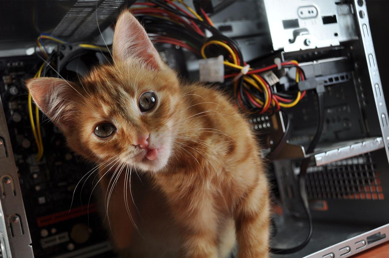 一隻貓在電腦上